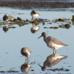 birds in shallow water