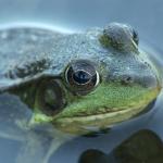 frog looking