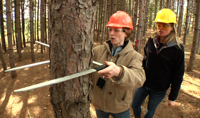 woman gauges tree