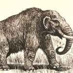 drawing of mammoth