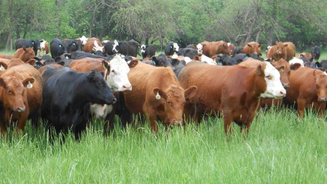 Beef Food Safety