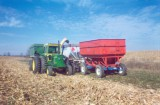 A-maize-ing Corn