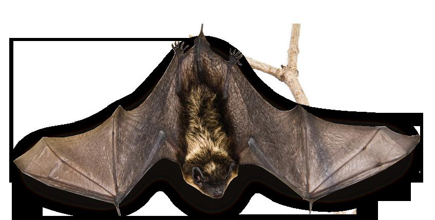 ito-header-bat