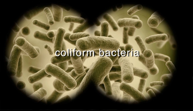 coliform
