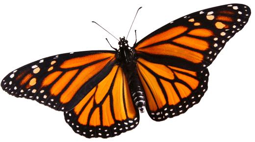 ito_critter-monarch