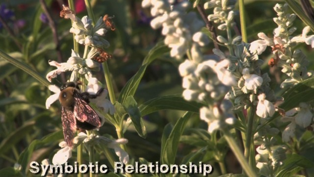 Plants and Pollinators