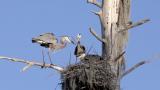 Bird Nest Conservation