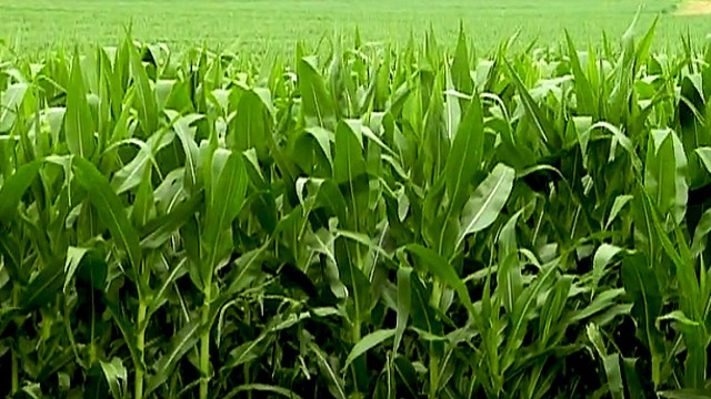 Corn Ethanol – Fueling Options for the Future