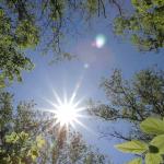 sun flare in trees