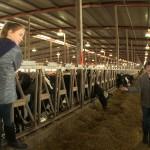 kids in cow barn
