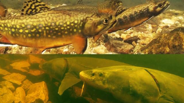 Comparing Fish Life Cycles