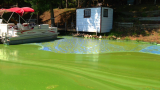 Chemistry & Biology of Algal Blooms