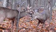 Managing White-Tailed Deer