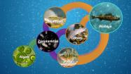 Walleye Biology