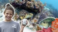 Into National Marine Sanctuaries – Full Episode